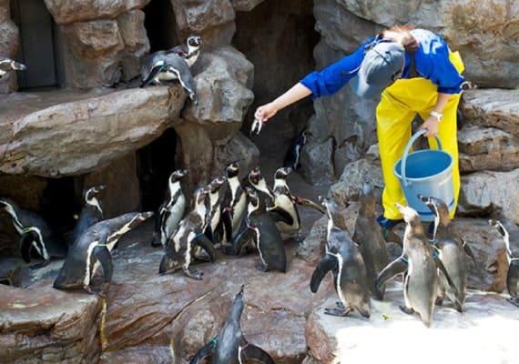 水族館・動物園